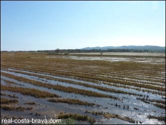 Baix Emporda Wetlands Costa Brava