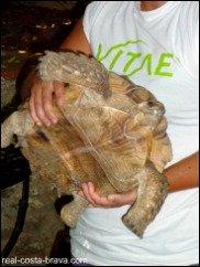 Albera Tortoise Centre Costa Brava