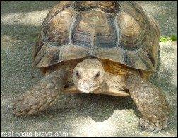 Albera Tortoise Centre